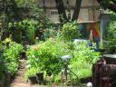 jardin-communautaire2_0412.jpg